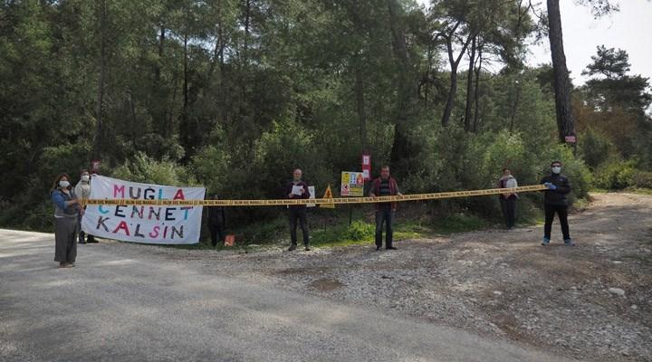 Ekoloji Birliği: Çıtlık'da orman katliamı acilen durdurulsun