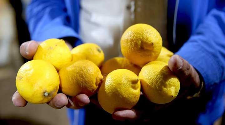 Limon ihracatı izne bağlandı