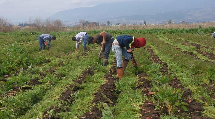 İspanya göçmenleri çalıştıracak