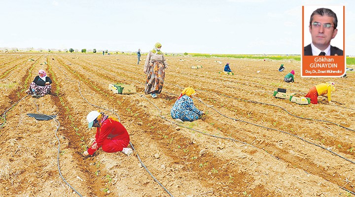 COVID-19 ile görünür olan tarım ve gıda krizi