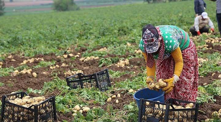'Üreticinin elinde tonlarca patates soğan çürümeye başladı'