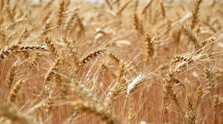 'Buğdayda açıklanan alım fiyatı, maliyetini karşılamıyor'