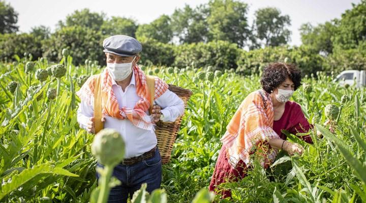 Tunç Soyer, enginar hasadına katıldı