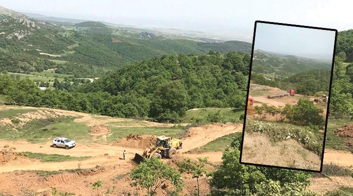 Yasağı fırsat bilen şirket ağaç katliamı yaptı