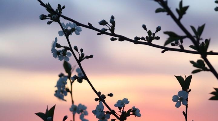 Her bitkinin ismini  öğreten program