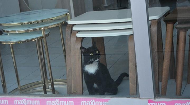 Bayramdan önce girdiği mağazada mahsur kalan kedi kurtarıldı