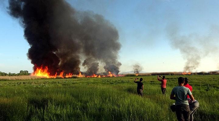 Van'da birçok kuş türüne ev sahipliği yapan sazlık alan yandı