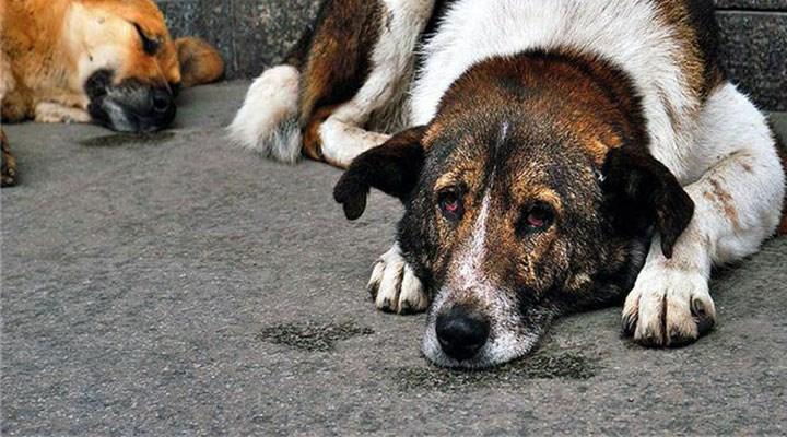 Köpeği sopayla döven kişiye barınakta hayvan bakma cezası
