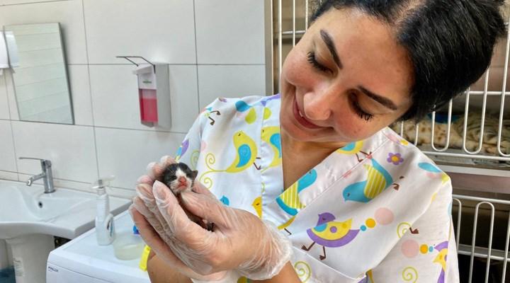 Dünyanın en minik bebek kedisi Seyhan'da doğdu