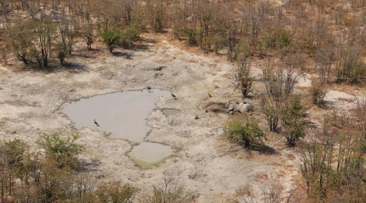 Botswana'da yüzlerce fil cansız bulundu: Nörolojik bir hastalıktan şüpheleniliyor