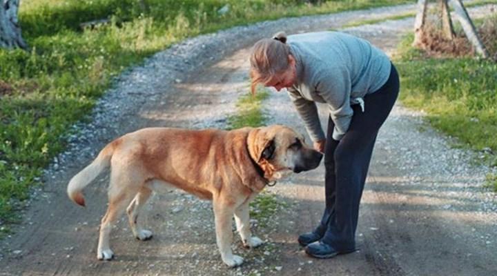 Cesur isimli köpek emekli albay tarafından katledildi