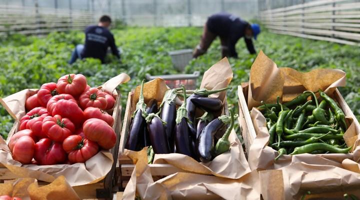 Ata tohumlarından üretilen sebzeler yurttaşlarla buluşuyor