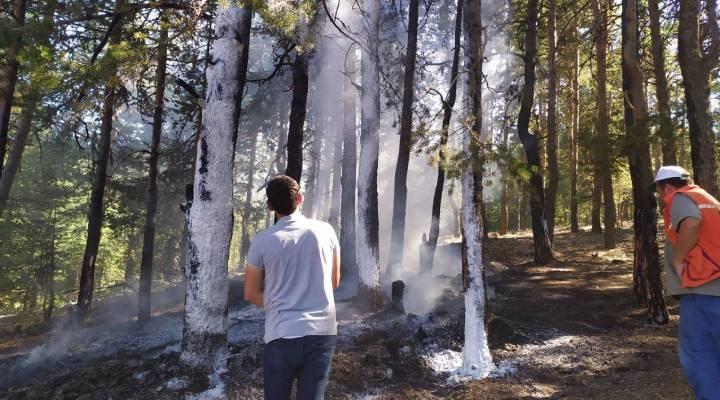 Bolu'da orman yangını: 500 metrekarelik alan zarar gördü