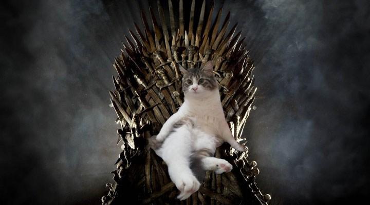 Bugün sevimli dostlarımızın günü: Dünya Kediler Günü kutlu olsun!