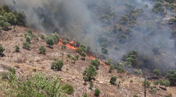 Milas Kılavuz'da orman yangını