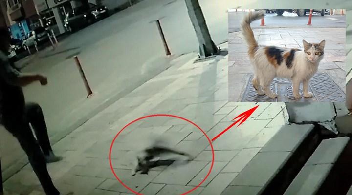 Kediyi tekmeleyen market sahibi: Sanki adam öldürdük