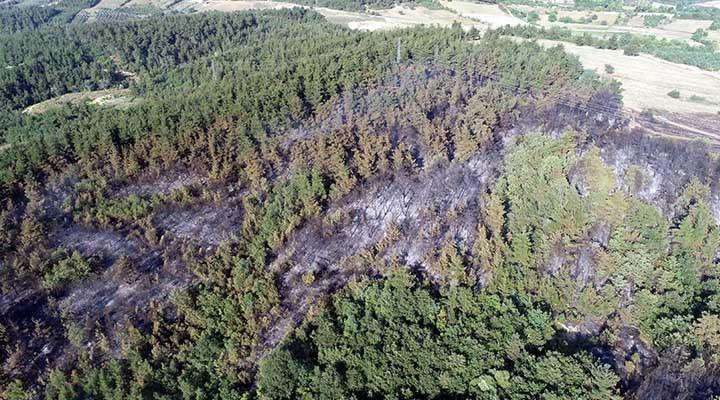 Bursa'daki orman yangınında 10 hektar alan zarar gördü: 1 gözaltı