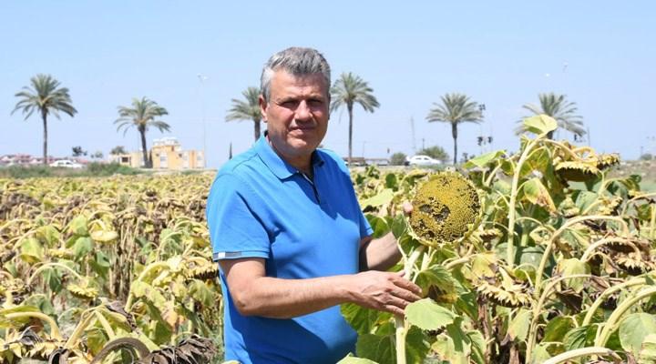 CHP'li Ayhan Barut: Ayçiçeği üreticisine destek verilsin