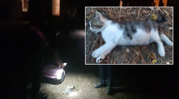 Silivri'de yavru kediyi işkenceyle öldürdüler