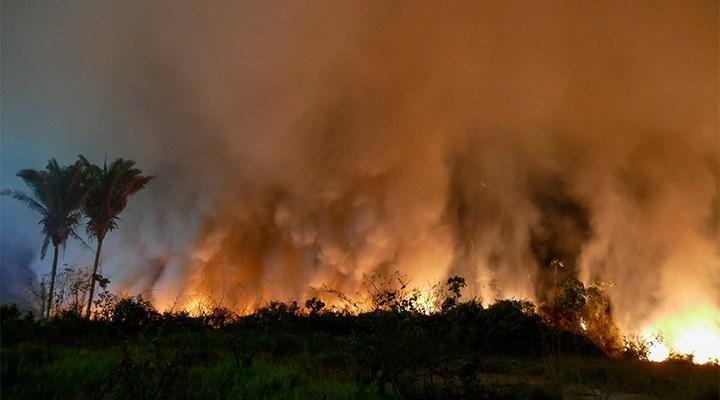 Brezilya'da yaklaşık 1,5 milyon hektar tropikal sulak alan yandı