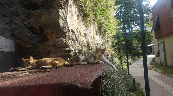 Galatasaray Üniversitesi Rektörlüğü, kampüste kedi beslenmesini yasakladı