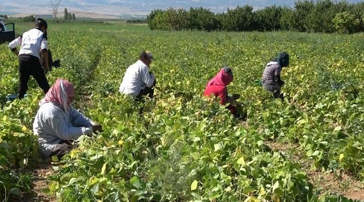 Mevsimlik tarım işçilerinde Covid-19 tespit edildi