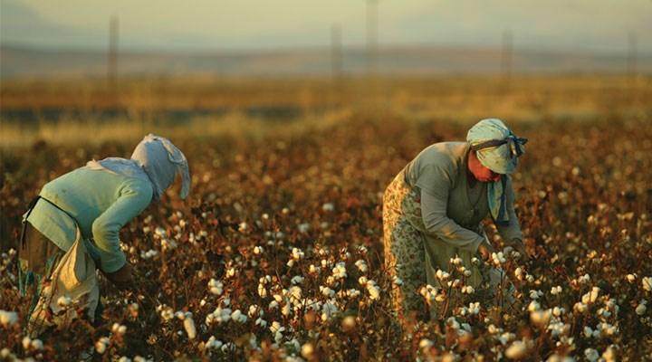 Pamukta üretim azalırken ithalat artıyor