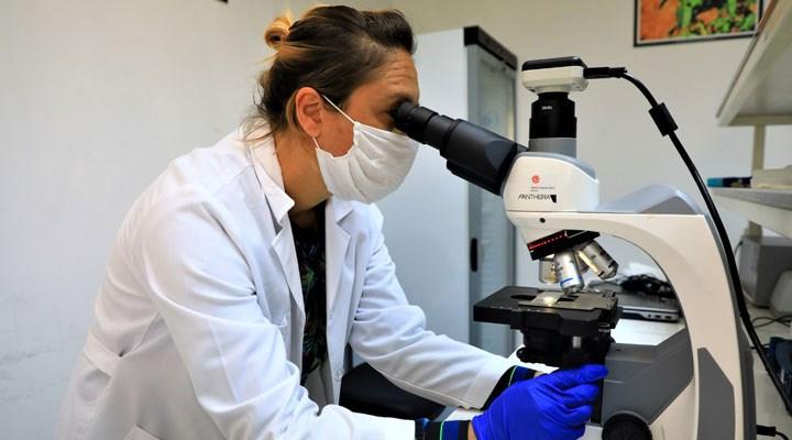 Muğla'da yerel tohumlar laboratuvarlarda test ediliyor