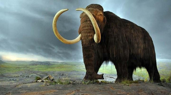 Denizli'de mamut dişi bulundu