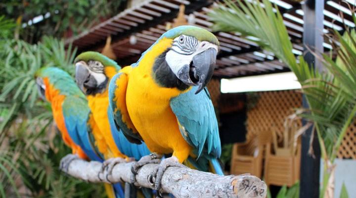 Ziyaretçilere küfreden papağanlar birbirinden ayrıldı: Resmen bundan zevk alıyorlardı