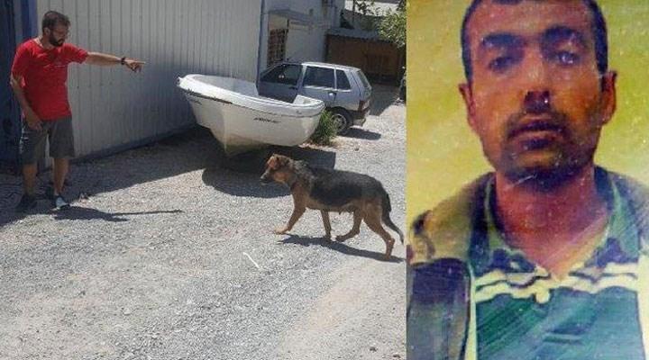 Bodrum'da köpek kafatası bulmuştu: 1 kişi cinayet şüphelisi olarak tutuklandı