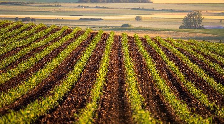 Üç Trakya kadar arazi artık ekilmiyor