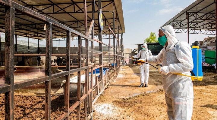 Hastalığın ülke geneline yayılma riski bulunuyor: 'Üç gün salgını hangi tarihte kontrol altına alınacak?'