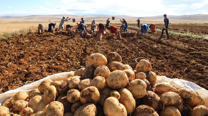 Patates üreticileri isyan etti: AKP pilimizi bitirdi