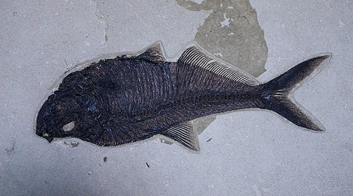 Adnan Oktar'ın fosilleri 417 milyon yıllık çıktı