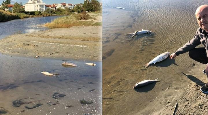 Silivri'de yüzlerce ölü balık kıyıya vurdu