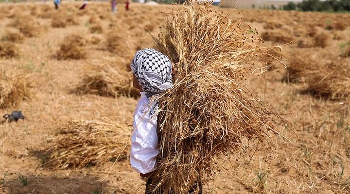 """Sarıbal, tarım krizinde çözüm yollarını anlattı: """"Çiftçinin alın terini birkaç şirkete yedirmeyeceğiz"""""""