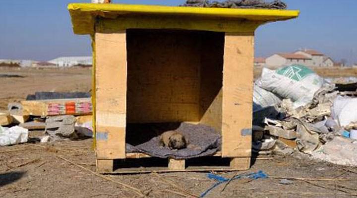 Kulübesi yakılan köpek ve yavrusunun yeni yuvaları da çalındı