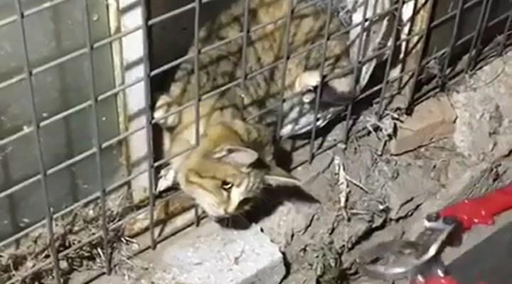 Başını tellere sıkıştıran kediyi itfaiye kurtardı