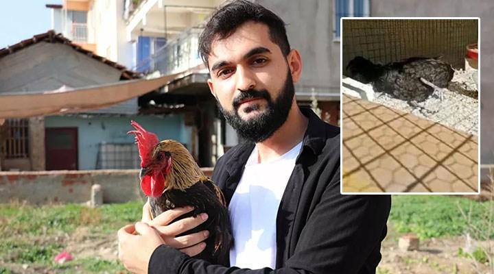 Öterken bayılan horoz Bahtiyar'a 25 bin liralık otomobille takas teklifi