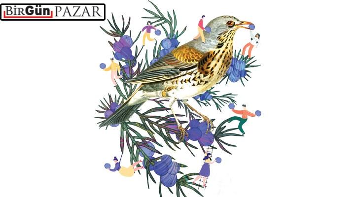 Birbirine mahkûm âşıklar: Ardıç ağacı ile ardıç kuşu