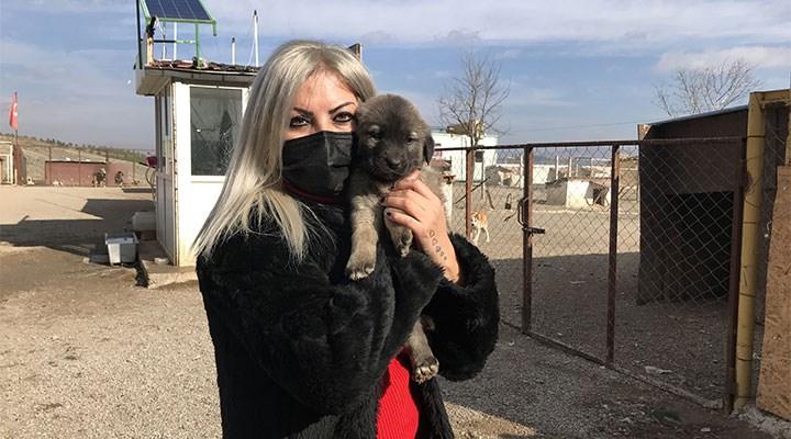 Konya'da tüm birikimiyle sokak köpeklerine barınak açtı