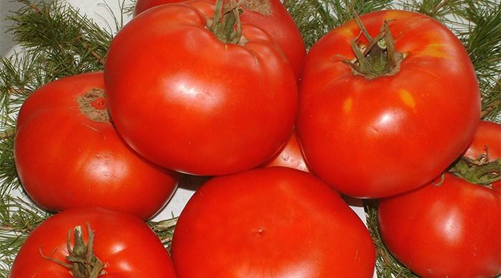 """""""Rus halkının yemediği domatesi biz mi yiyeceğiz?"""""""