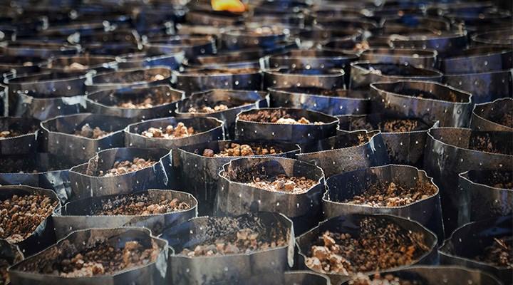 20 ton imha edildi, 122 bin ton çay küflenmek üzere: Çaykur'du, 'çayküf' oldu!