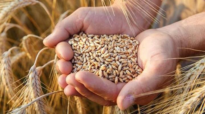 TMO'dan yeni ihale: Buğday ithalatı rekor seviyeye çıktı