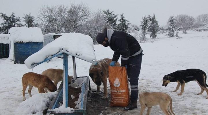 İBB Başkanı İmamoğlu'ndan sokak hayvanları için çağrı