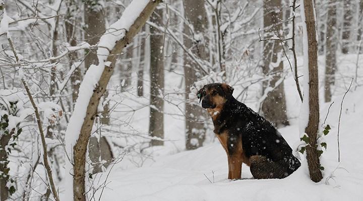 Kış sokak hayvanları için çok daha çetin: Hayat kurtarıcı 3 madde