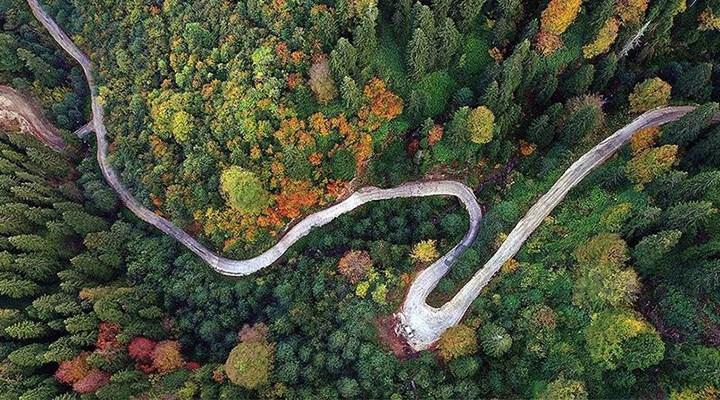 Ormanları arsa ofisine dönüştüren yönetmelik için iptal çağrısı: Ekosistem görmezden gelindi