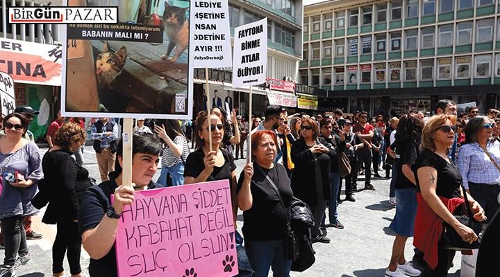 Hayvan hakları yasası mücadelesinde son eşik!