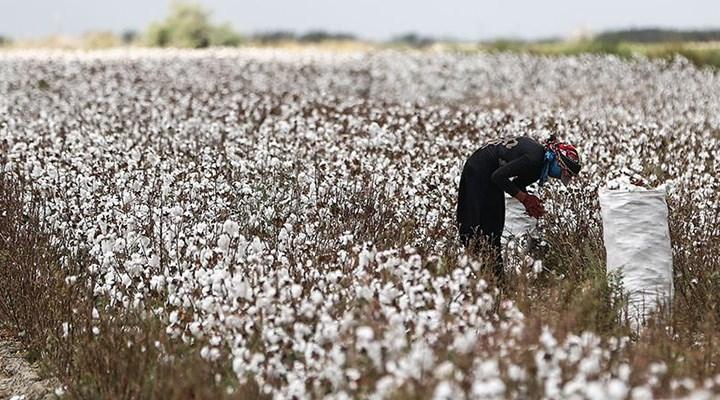 Pamukta dışa bağımlılık sürekli artıyor üretim alanları ise giderek küçülüyor